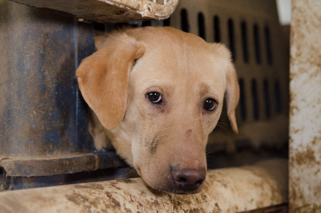 Nearly 50 dogs seized from Western Wisconsin puppy mill