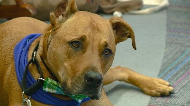 Humane Society teaching kids about good dog care
