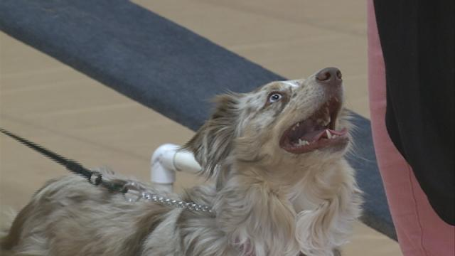 Viterbo University management students help area animals get adopted at Furfest