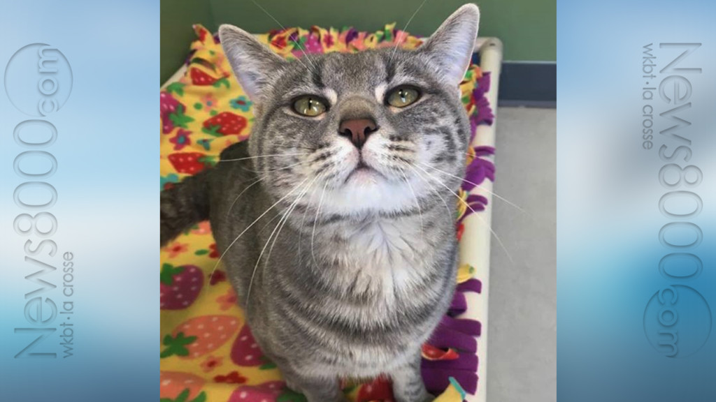 Pet of the Week – Gandalf