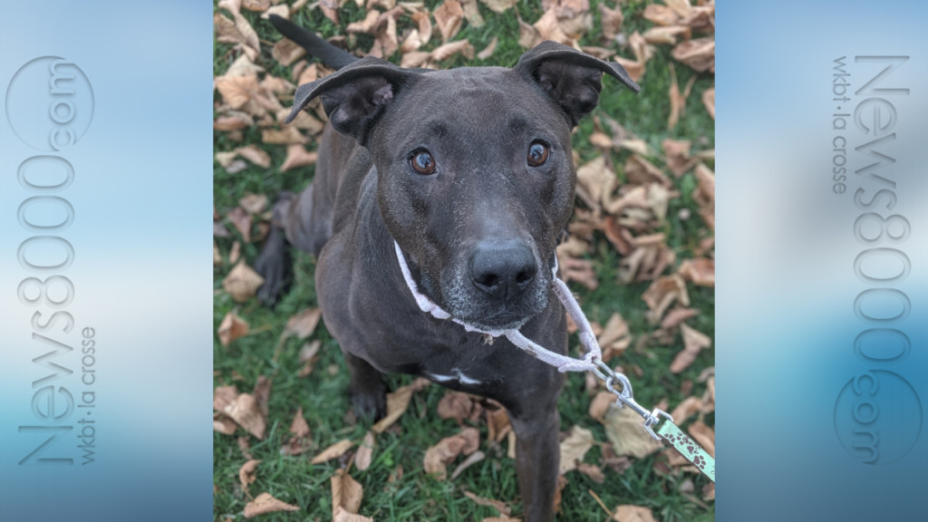 Pet of the Week – Gowther