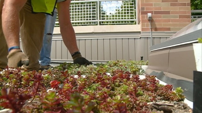 Western installs plants for new 'green roof'