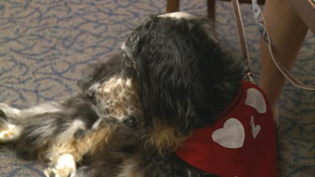 A local organization steps in to help when ailing pets become a financial burden