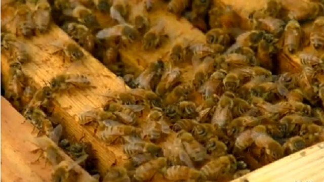 Grant County officials warn of bee inspection scam