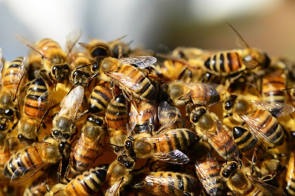 Wisconsin beekeepers see high bee losses this winter