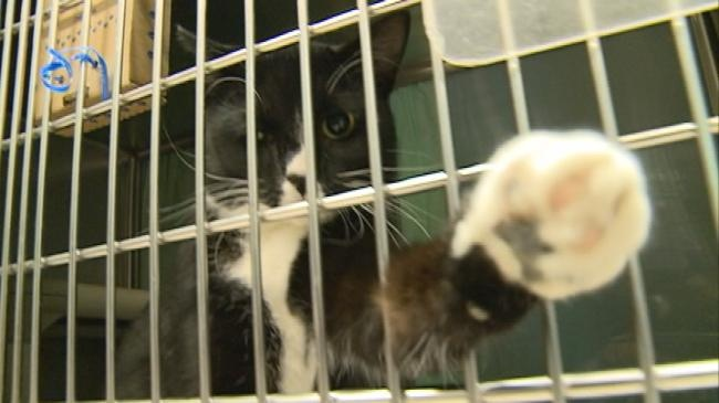 Humane Society looking for more foster pet parents