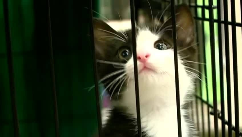 Coulee Region Humane Society holding adopt-a-thon this weekend