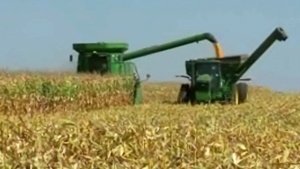 Soaking rains give Wisconsin farmers a boost