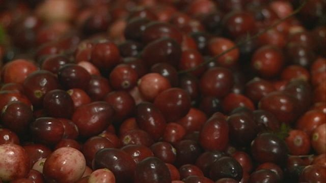 Cranberry season to see record harvest