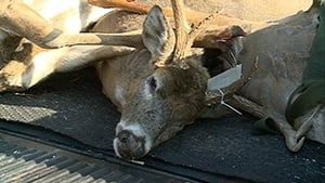 Iowa House OKs crossbow deer hunting for residents