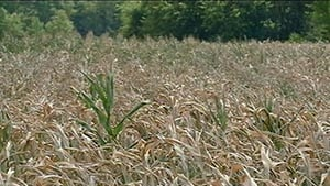 Ag experts: Don't panic about drought yet