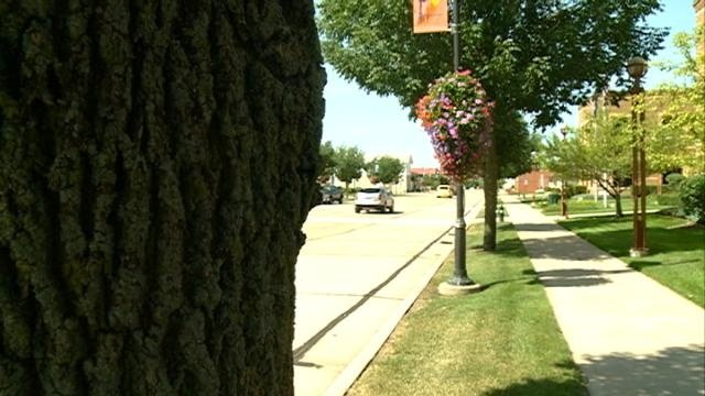 Emerald Ash Borer forces Onalaska to remove ash trees from boulevards