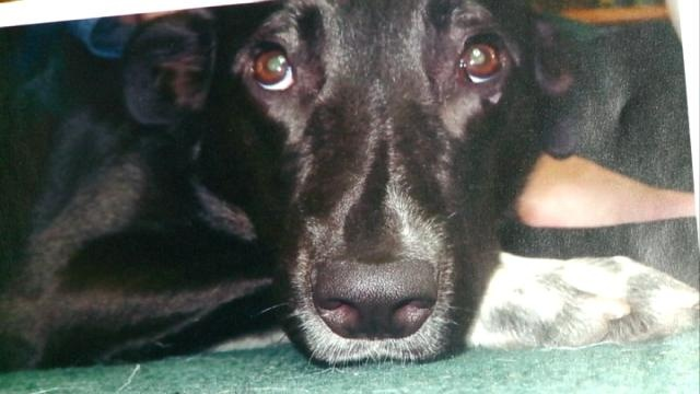 Family questions justice system after dog is slain