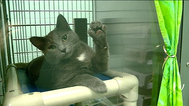 Coulee Region Humane Society overcrowded with cats