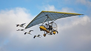 Operation Migration needs new aircrafts to help Whooping cranes