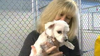 Westby 'Sewer Dog' finds new home