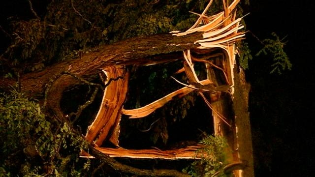 Severe weather downs trees, cuts power