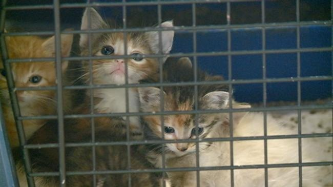 """UPDATE: Eight kittens found in plastic tote doing """"wonderfully"""""""