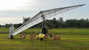 8 whooping crane chicks arrive in Wisconsin for aircraft training