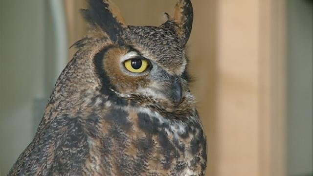 International Owl Center looks to its future
