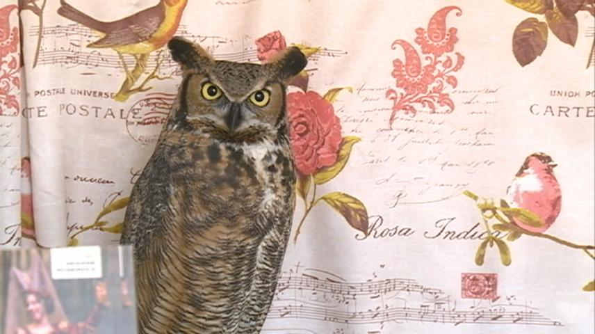 International Festival of Owls underway in Houston