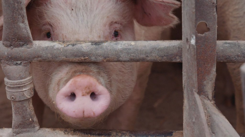 Lawsuit alleges Hormel, other companies inflated pork prices