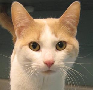 Pet of the Week – Jack the Cat