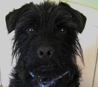 Pet of the Week – Jack the Dog