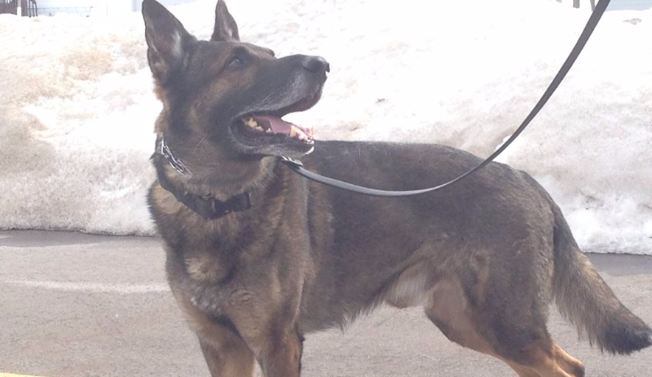 Town of Campbell PD trying to fill empty K-9 spot