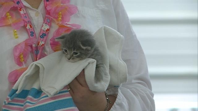 Winona Area Humane Society looks for pet foster parents at Kitten Shower