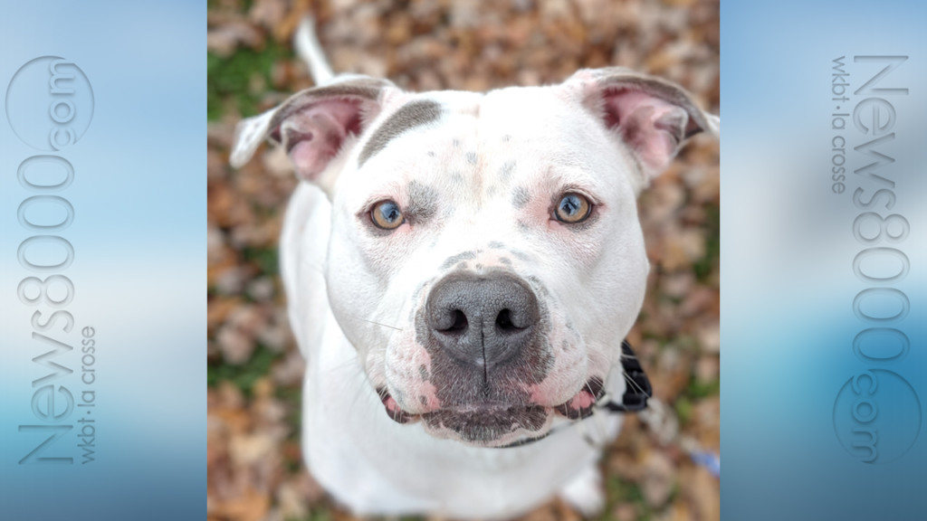 Pet of the Week – Lady