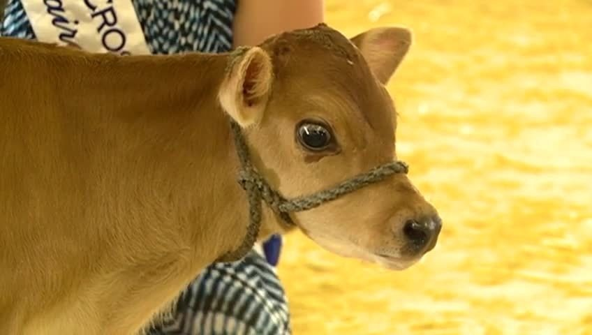 Little Squirts Dairy Show gets kids interested in agriculture