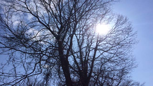 Tree worker killed in on-the-job incident in Richfield