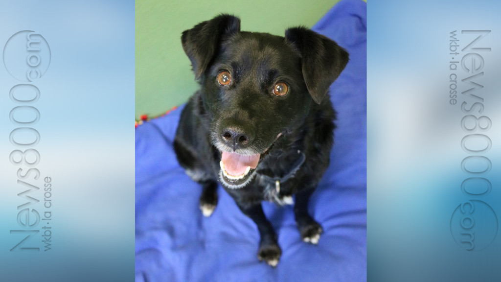 Pet of the Week – Max