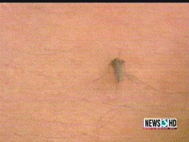 Iowa officials: 1 person diagnosed with West Nile