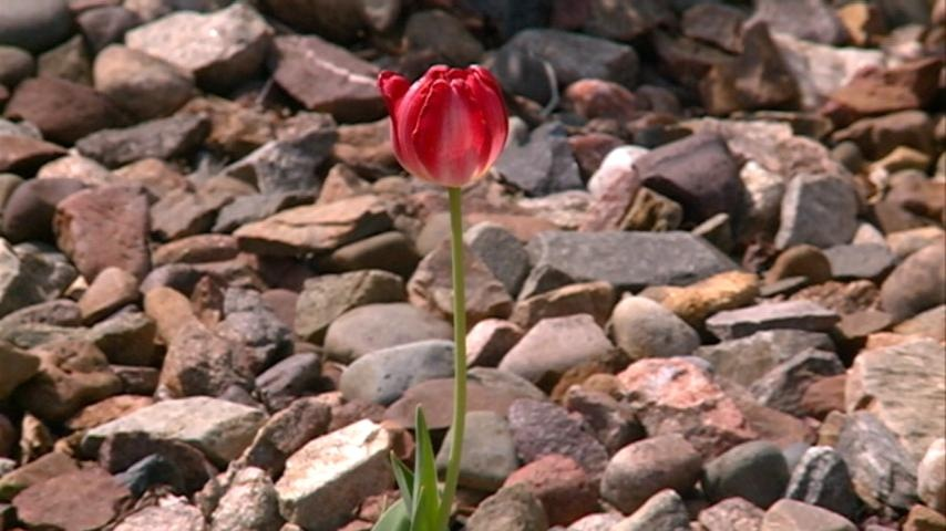 Restaurants see surge for Mother's Day
