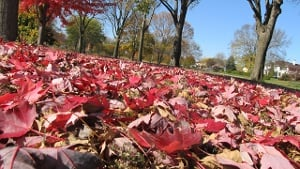 DNR predict brilliant Minnesota fall color season