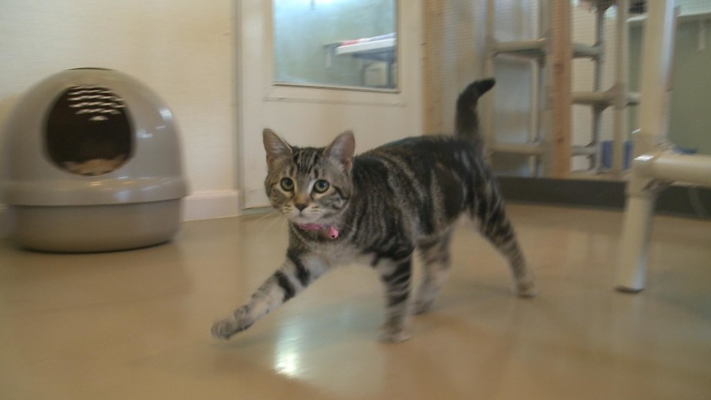 'Barn Cats' available from La Crescent Animal Rescue
