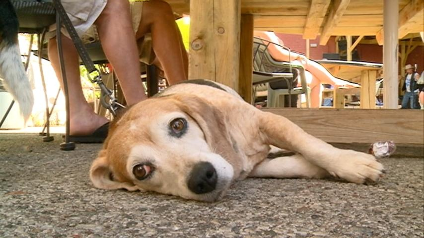 'Peace, Love & Dogs Hootenanny' raises awareness for Coonhounds