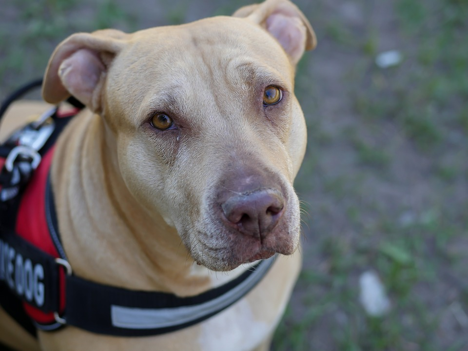 Bill would fine people who pass off pet as service animal