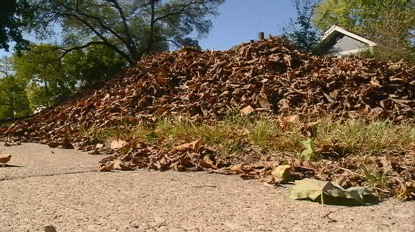 La Crosse looking at helping leaf collection process