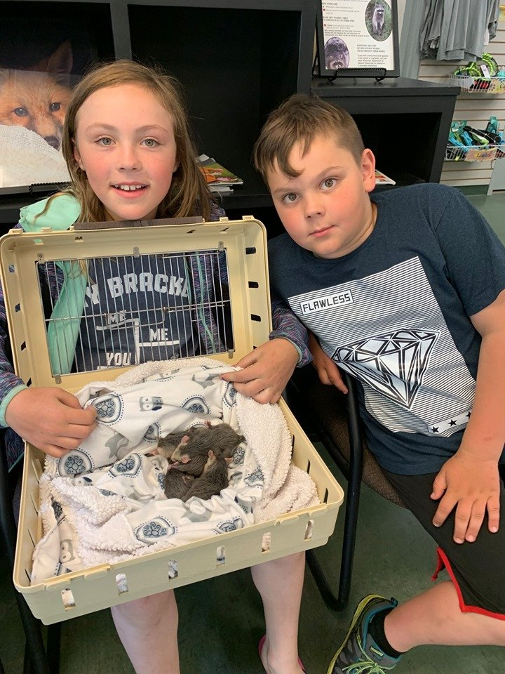 Baby opossums to survive thanks to caring kids