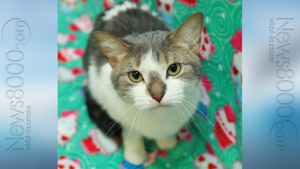Pet of the Week – Gizmo