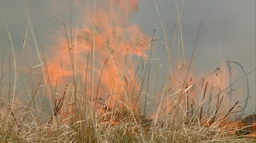 Prescribed burn aims to bring new life to prairie