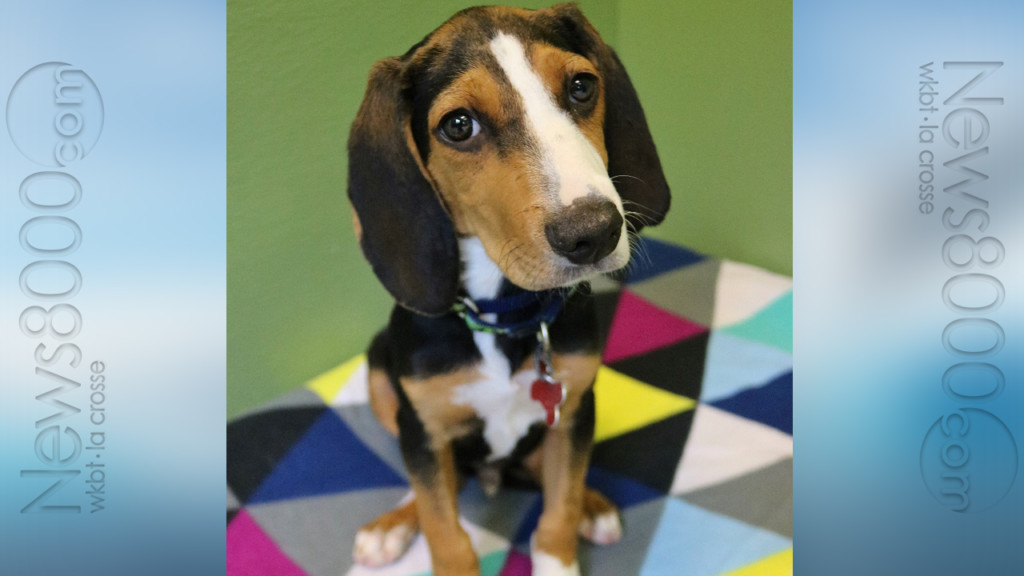 Pet of the Week – Reagle