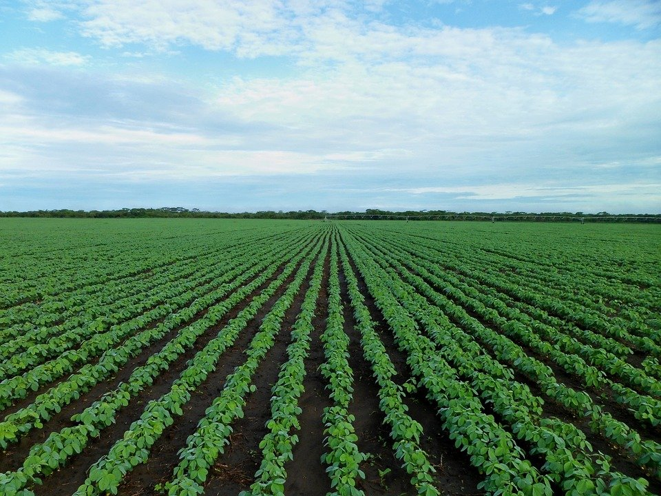 Iowa soybean leaders worry about farm trade, travel to China
