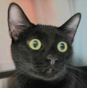 """Pet of the Week – """"Sparky"""""""