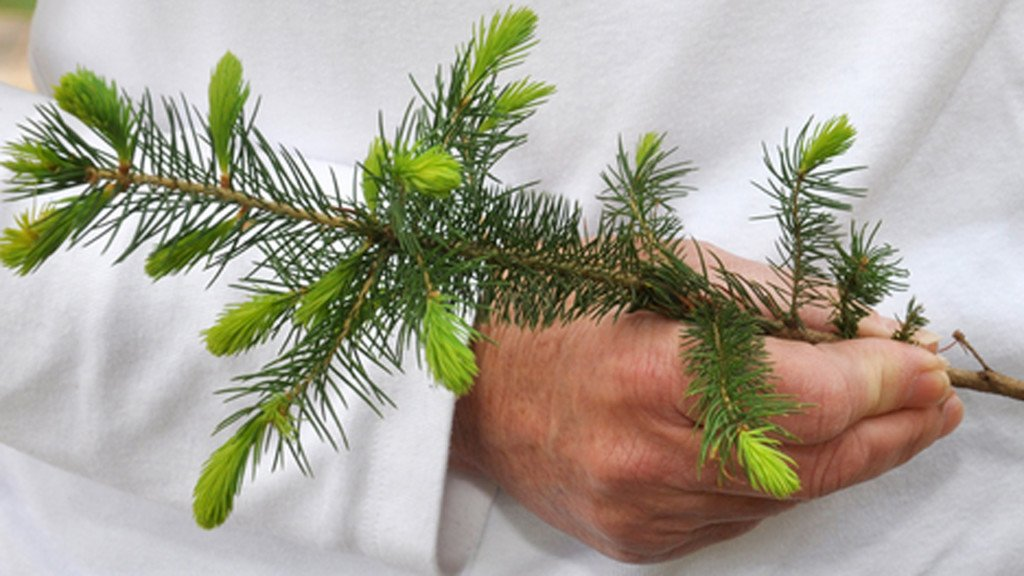 All fourth-grade classrooms in Wisconsin can order free tree seedlings from DNR