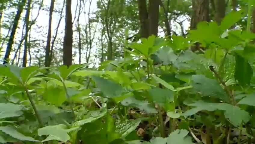 Watch for ticks as temperatures rise