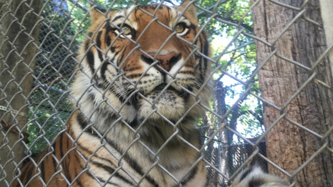 Bill would ban private ownership of exotic animals